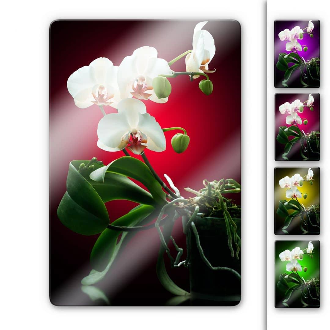 The Beauty Of An Orchid Glass Art Wall Art Com