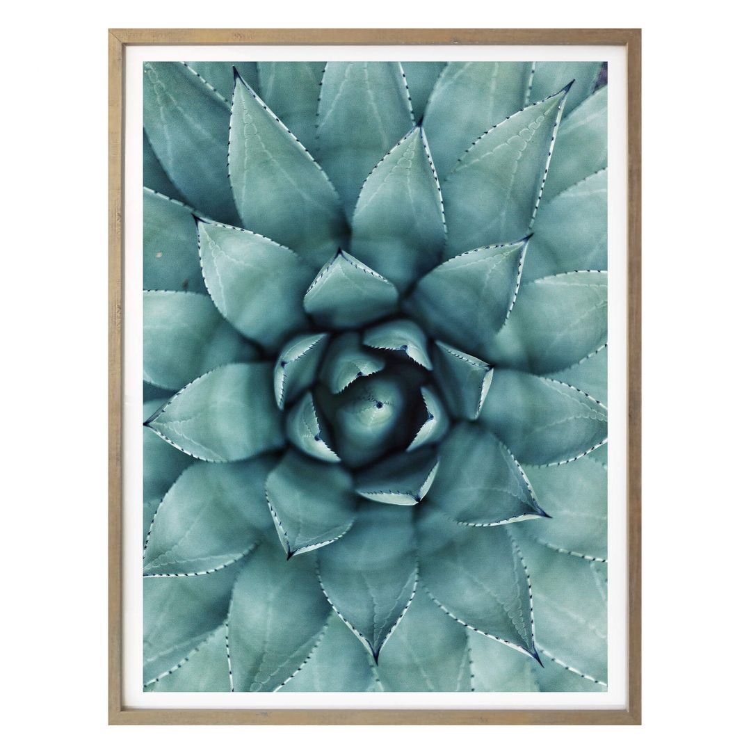 Poster Agave 02