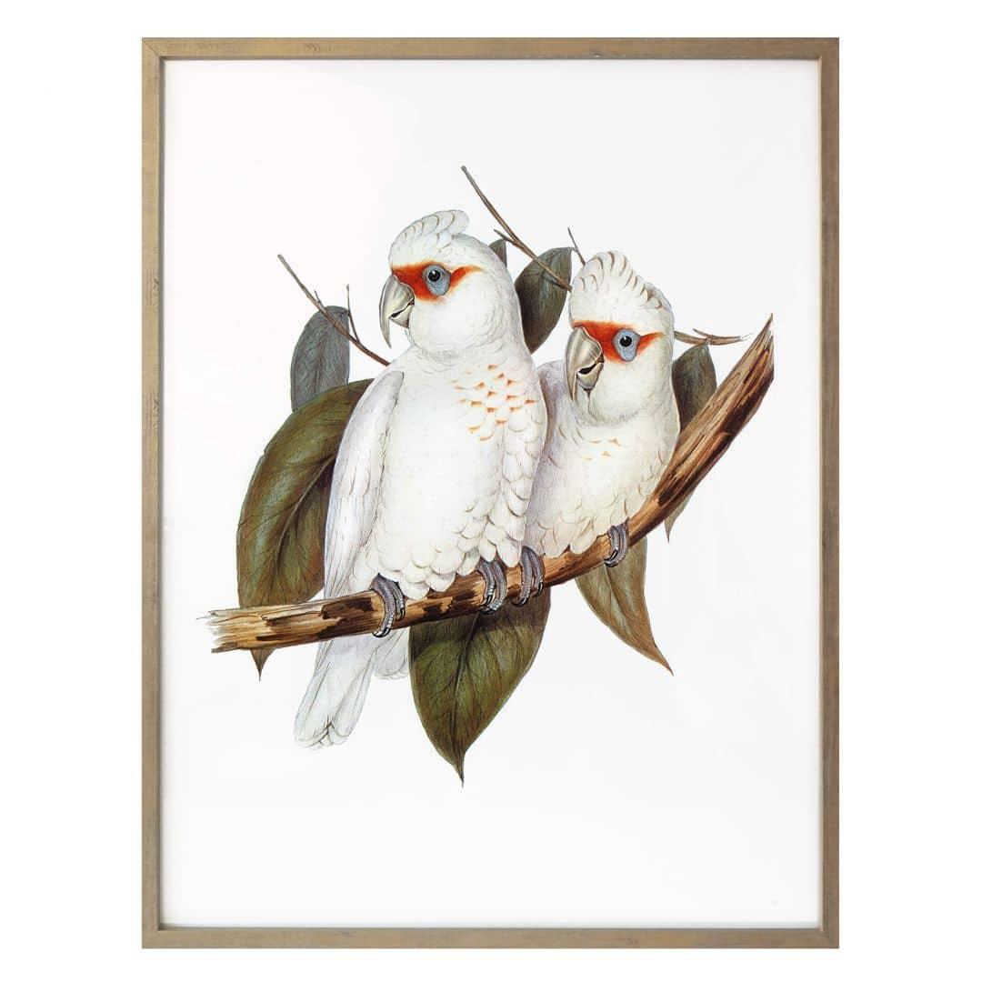Poster Kaketoe