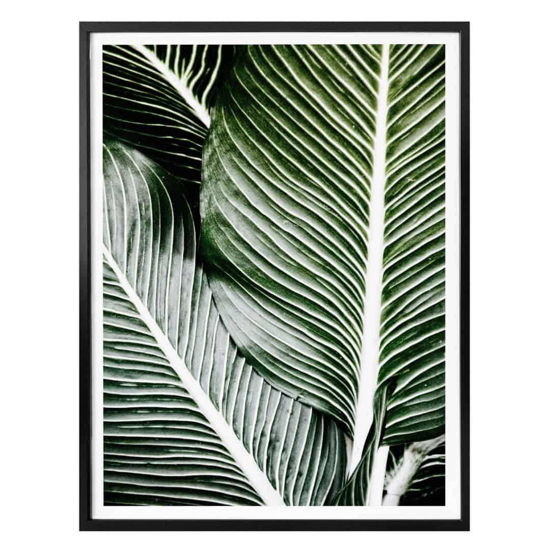 Poster Palm Tree Leaves