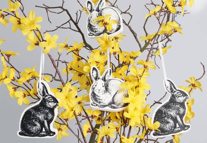3D Mini Rabbits