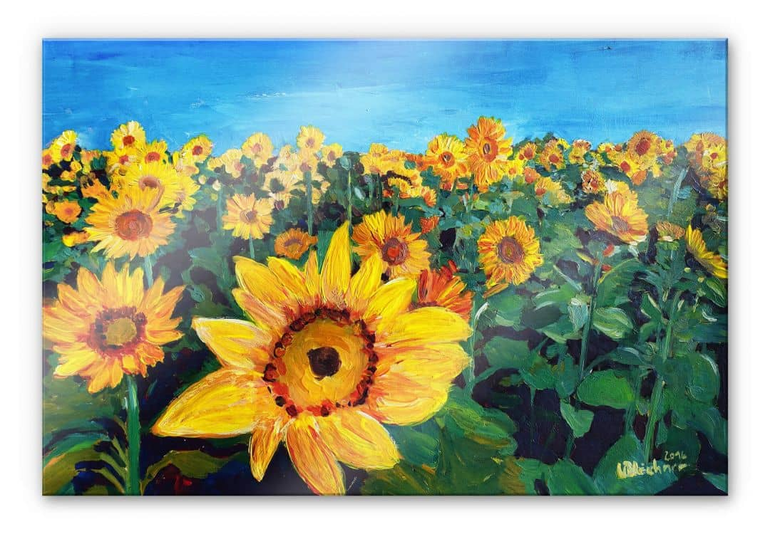 Acrylic Print Bleichner - Sunflower Fields   wall-art.com