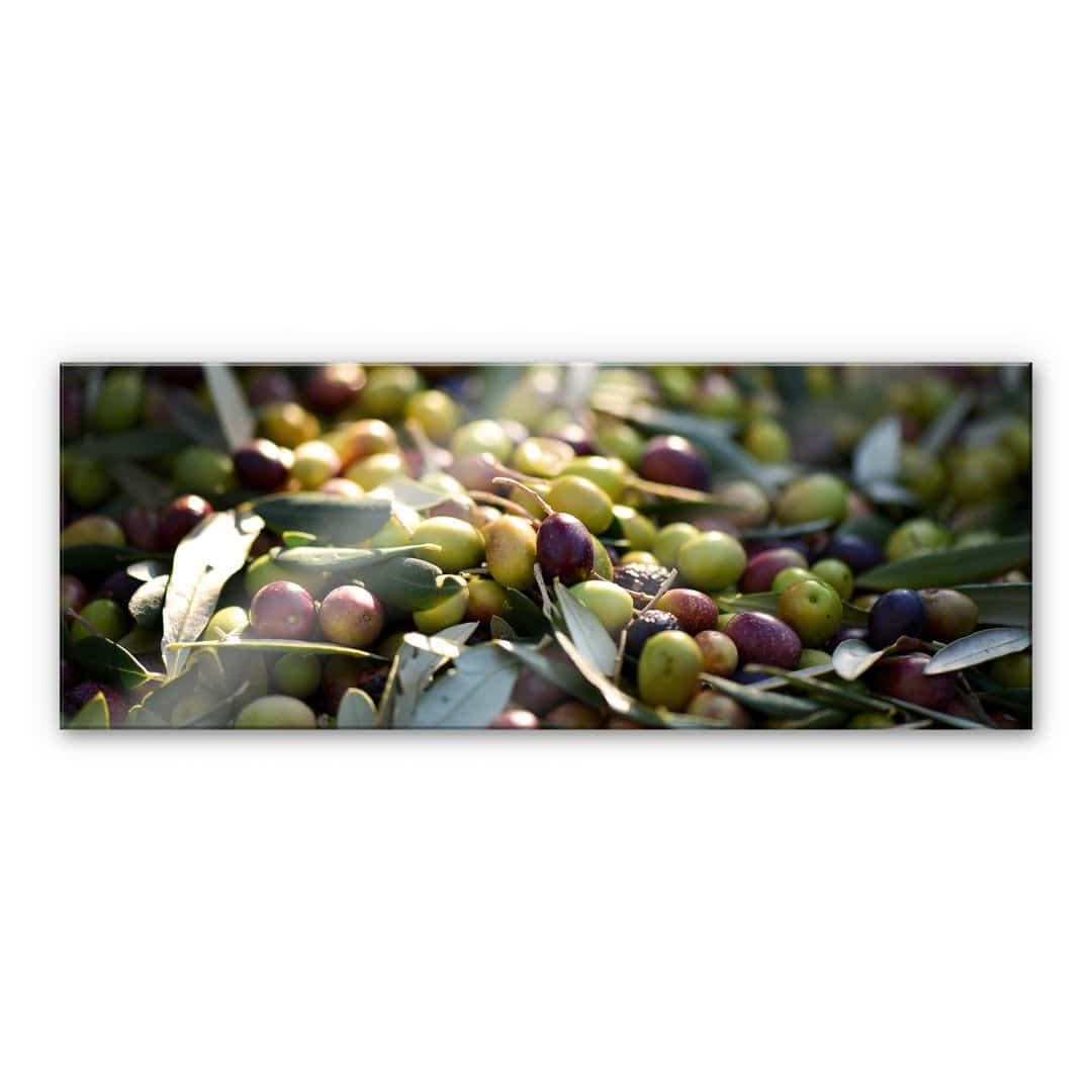 Acrylglasbild mediterrane oliven panorama wall - Mediterrane wandbilder ...