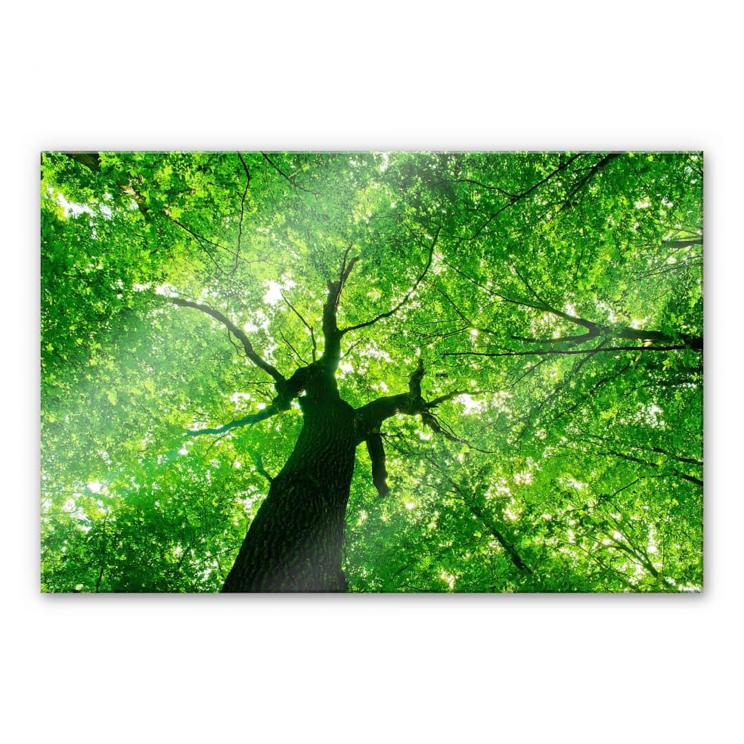 XXL Wandbild Under the Trees