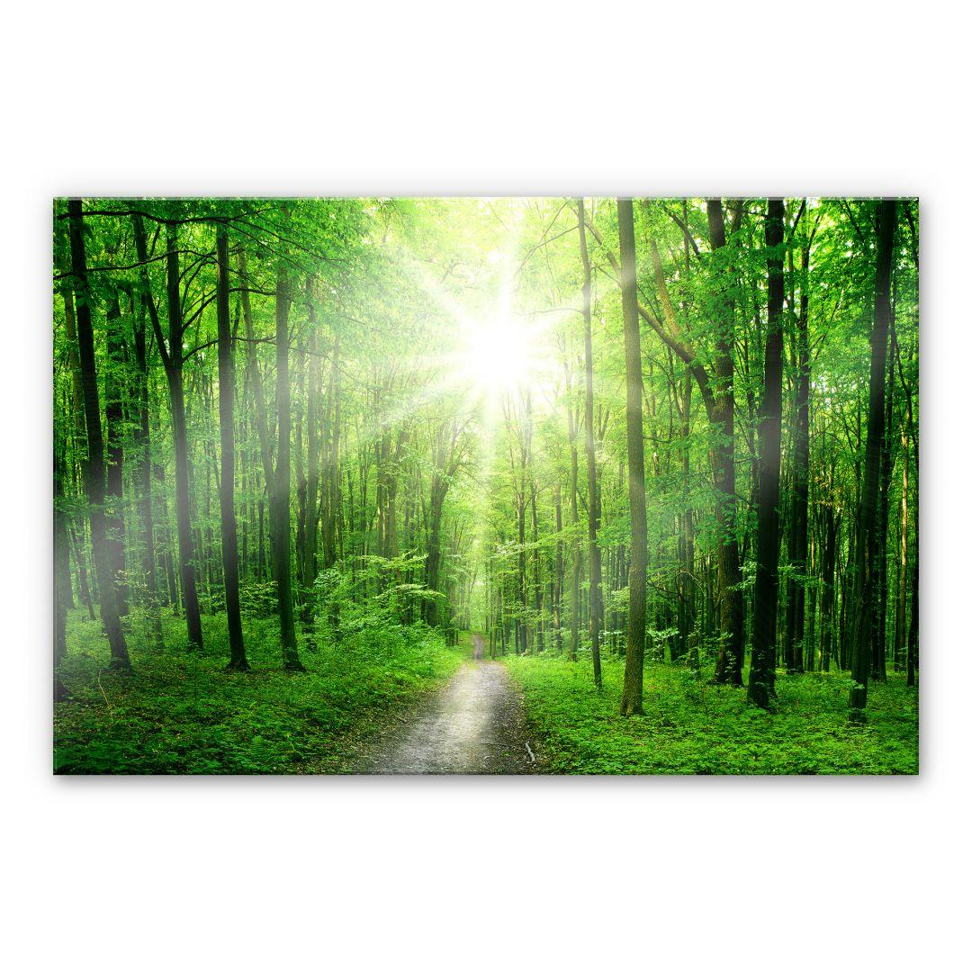 XXL Wandbild Sunny Forest