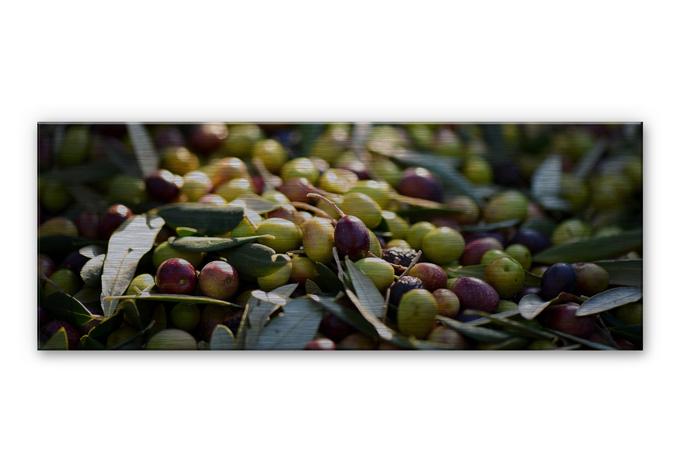 mediterranean olives aluminium print panorama. Black Bedroom Furniture Sets. Home Design Ideas