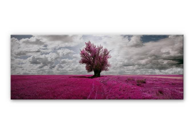 aluminium dibond eenzame boom panorama. Black Bedroom Furniture Sets. Home Design Ideas