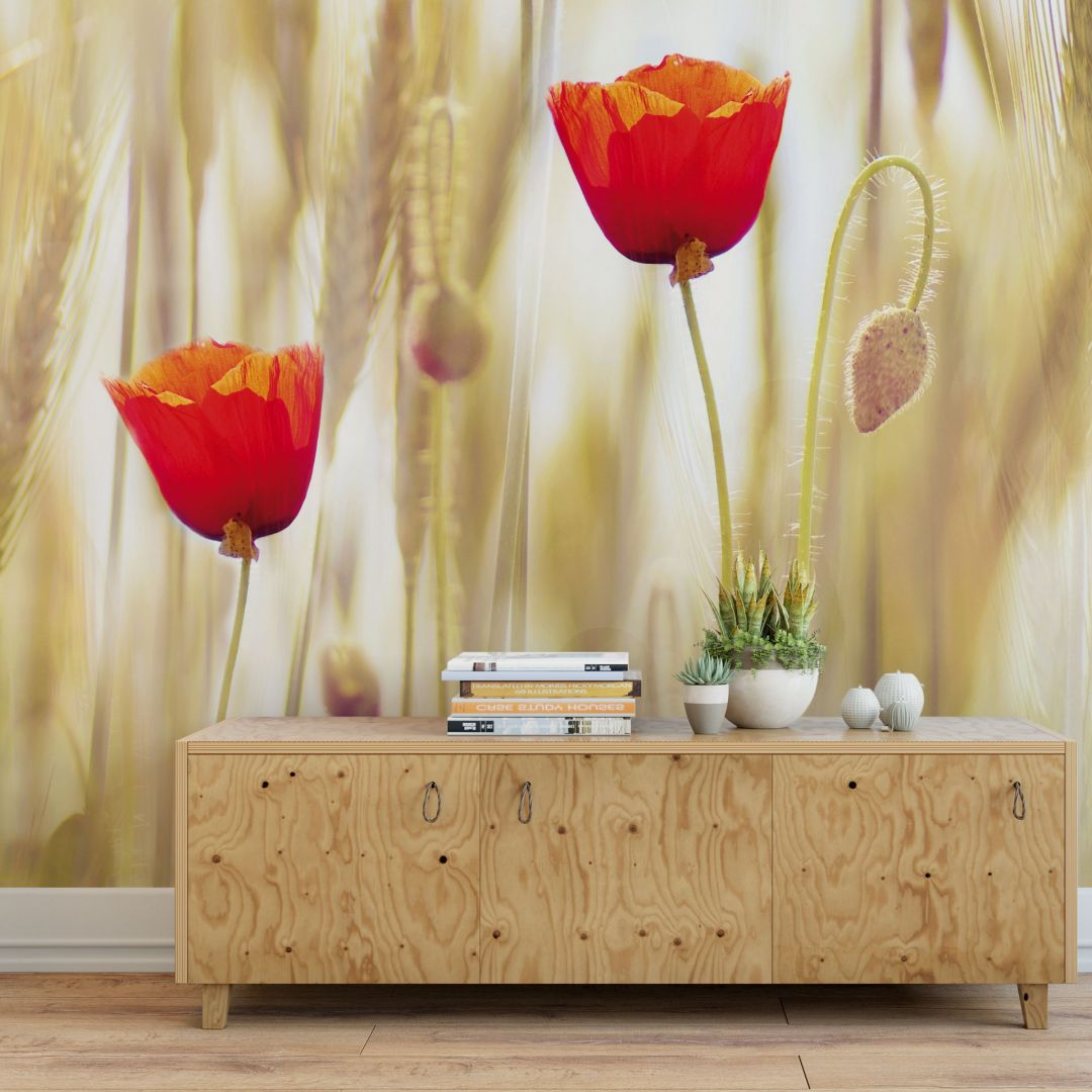 fototapete poppies das frische mohnblumenmotiv wall. Black Bedroom Furniture Sets. Home Design Ideas