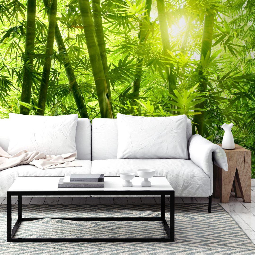Fotomurale Un raggio di sole nel bosco di bambùù