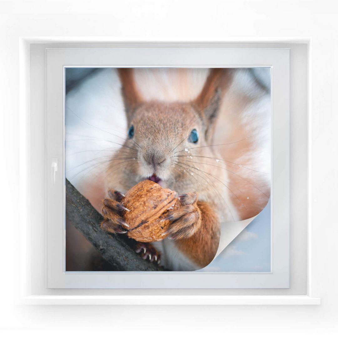 sichtschutzfolie eichhörnchen mit nuss  quadratisch