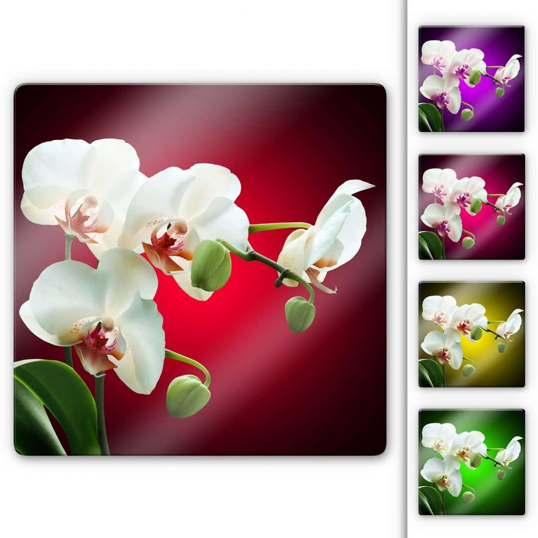 Glasbild Blütenpracht einer Orchidee - quadratisch