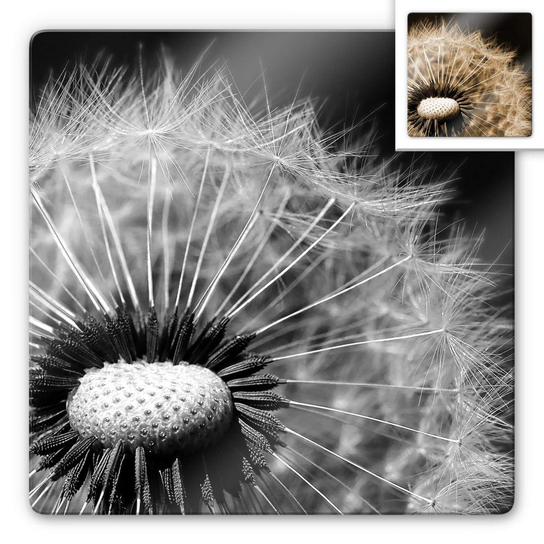 Glasbild Dandelion