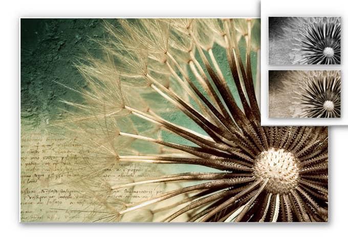 Wandbild Pusteblumen-Poesie