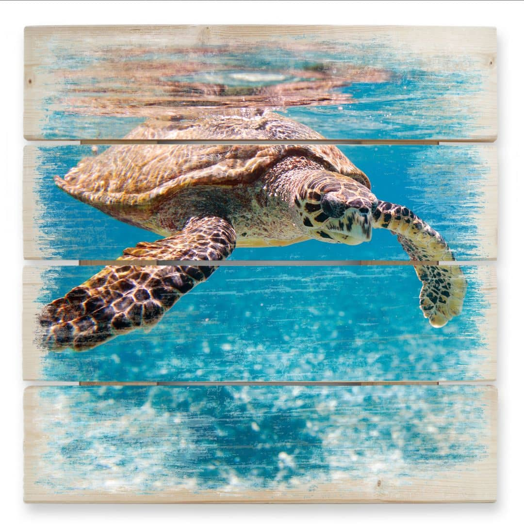 Swimming Turtle - Wood Print