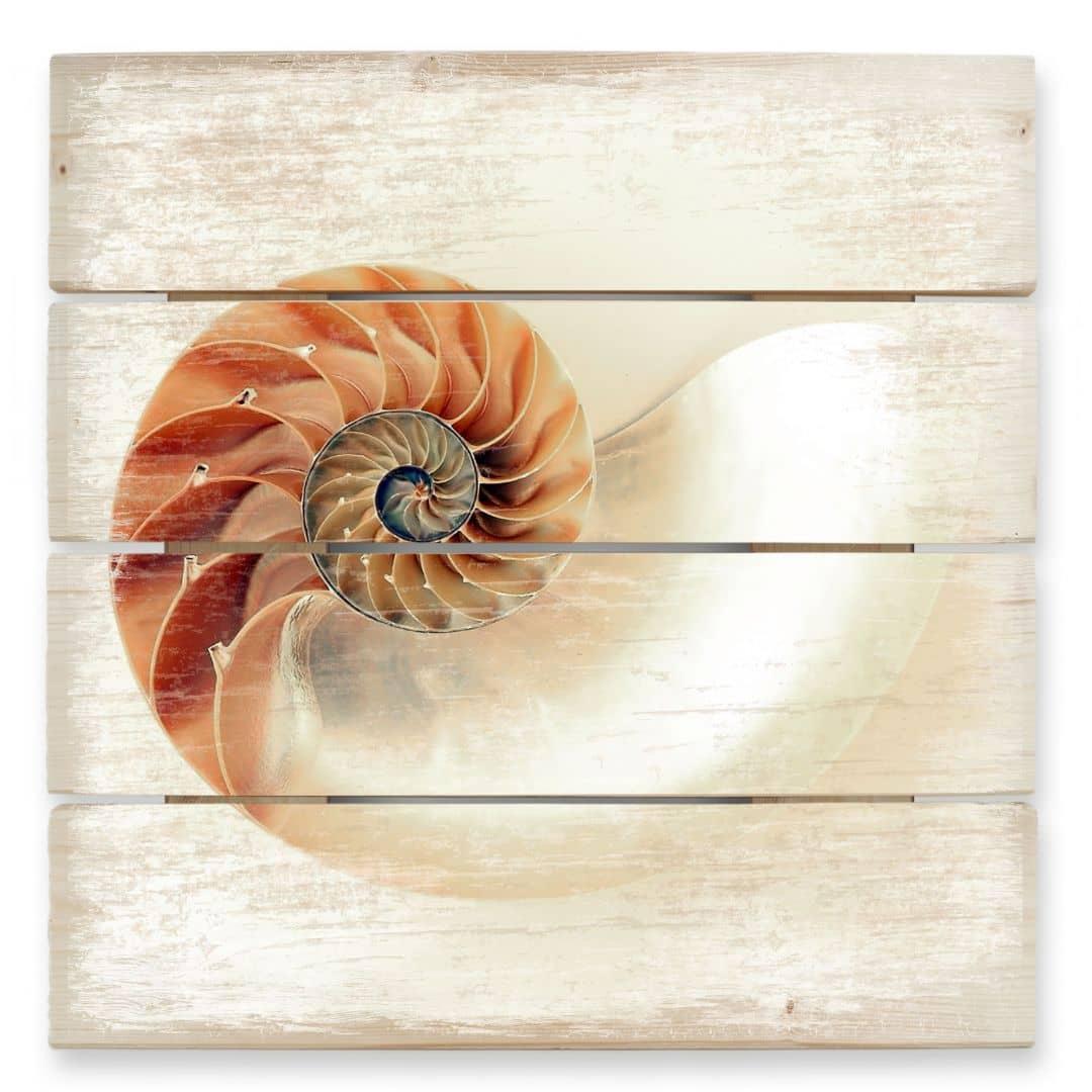Holzbild Nautilus