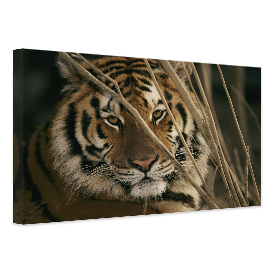 tableau sur toile ng tigre wall. Black Bedroom Furniture Sets. Home Design Ideas