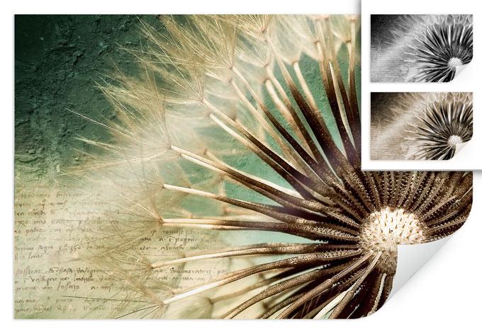 Poster Pusteblumen Poesie