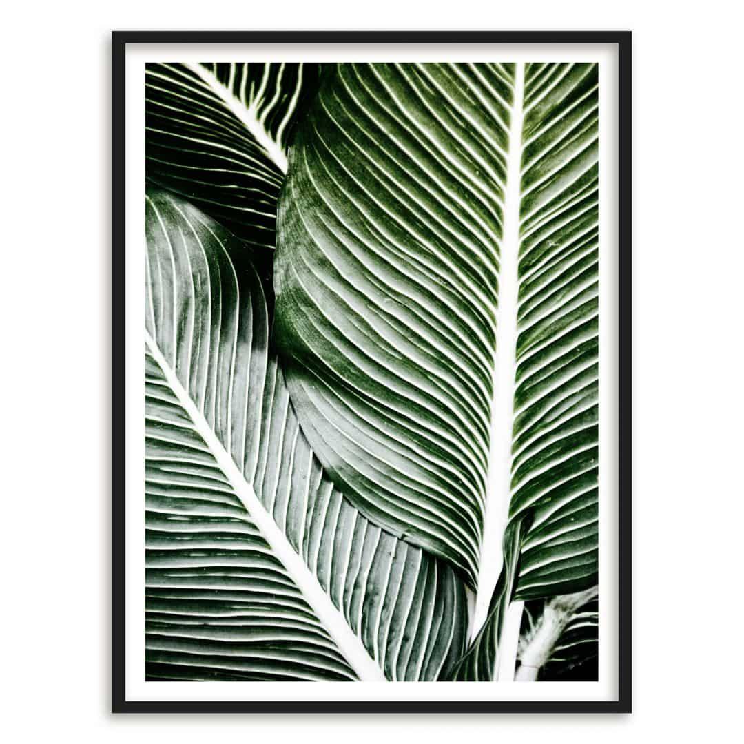Poster con cornice foglia di palma 24x30 cm for Cornice poster 61x91