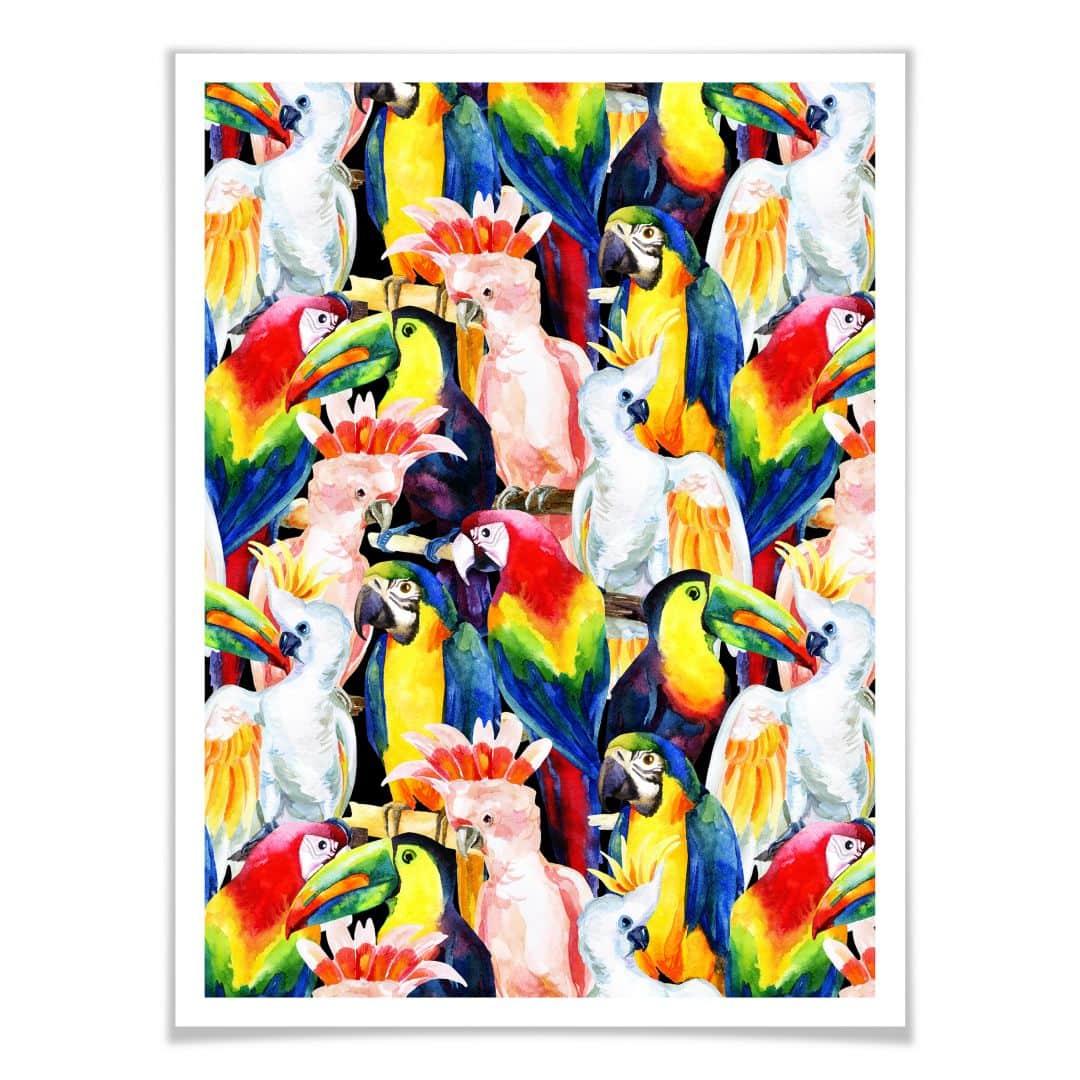 Poster Tropical Birds