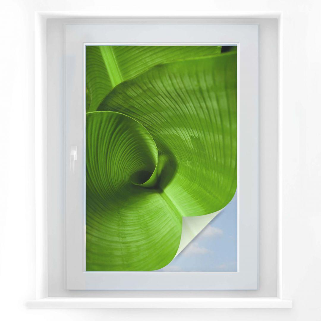Pellicola adesiva per vetri foglia di banano wall for Pellicola adesiva per vetri ikea