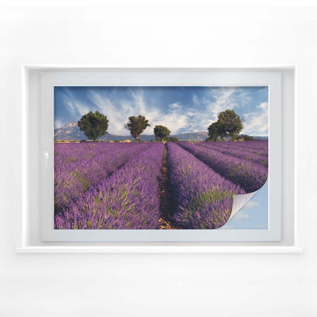 Sichtschutzfolie Lavendelfeld