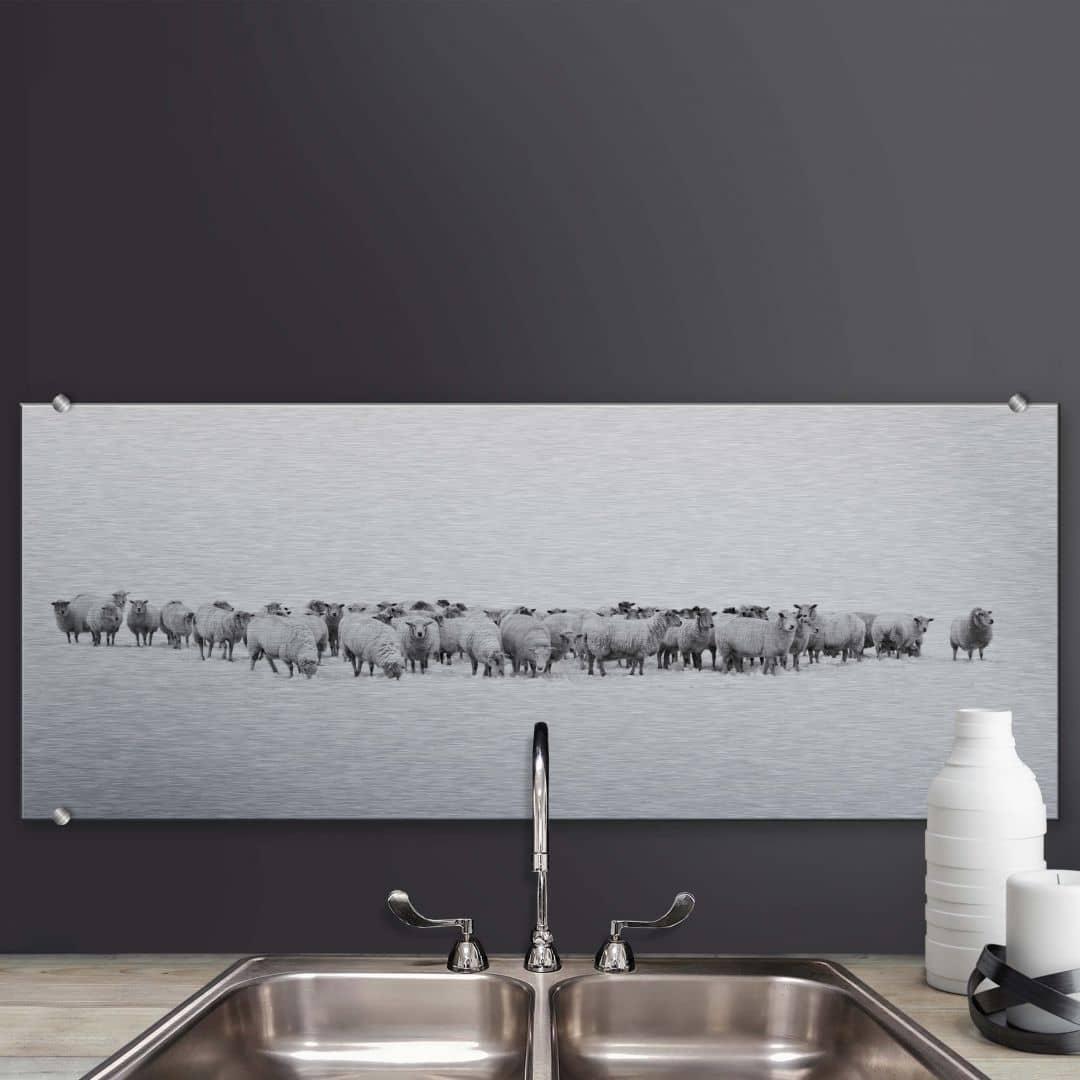 Spatscherm Alu-Dibond Kudde Schapen - panorama