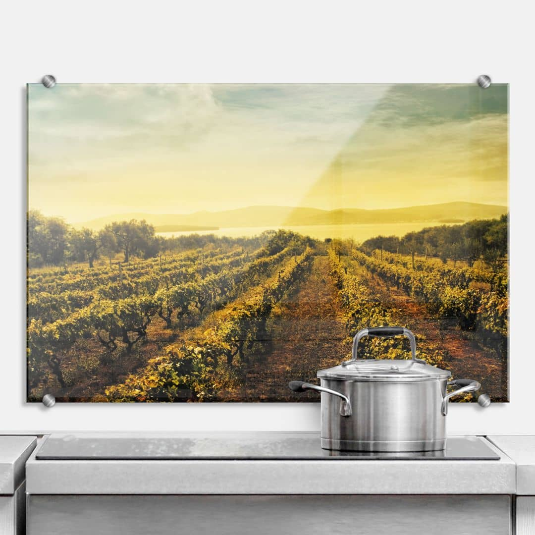 Küchenrückwand Weinreben im Sonnenuntergang