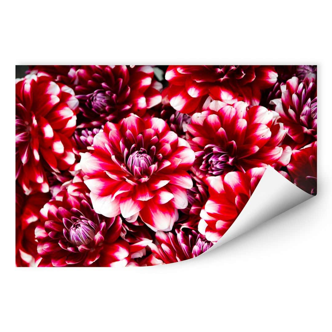 Wallprint Rote Blütenpracht