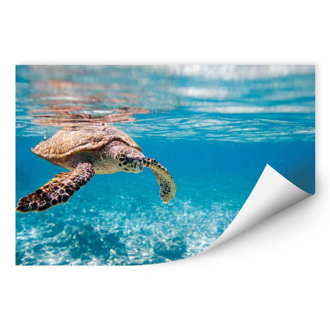 Wallprint W - Schildkröte auf Reisen