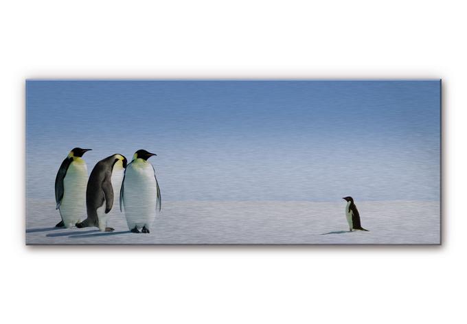 alu dibond silbereffekt penguin panorama wundersch ne deko f r die wand wall. Black Bedroom Furniture Sets. Home Design Ideas