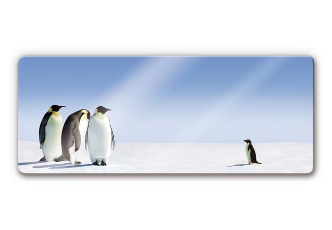 Glasbild Penguin - Panorama