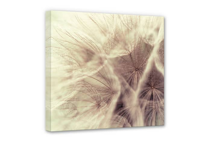 leinwand pusteblume close up sch ne blumendeko f r die wand wall. Black Bedroom Furniture Sets. Home Design Ideas