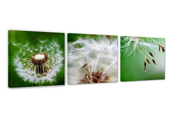 Dandelions in the wind Canvas print