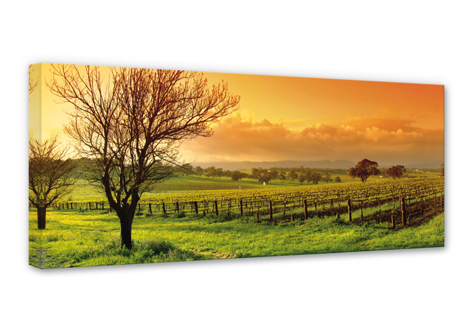 vineyard panorama canvas print wall. Black Bedroom Furniture Sets. Home Design Ideas