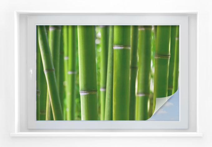 Pellicola adesiva per vetri bosco di bamb wall for Pellicola adesiva per vetri ikea