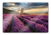 Glasbilder - Glasbild Lavendelblüte in der Provence 60x40 cm