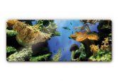 Glasbilder - Glasbild Korallenriff - Panorama