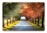 Glasbilder - Glasbild Herbst