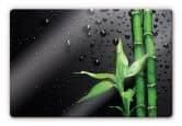 Glasbilder - Glasbild Bamboo over Black 60x40cm
