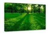 Leinwandbilder - Leinwandbild Park im Grünen