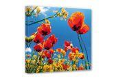 Leinwandbilder - Leinwandbild Mohnblumen im Rapsfeld