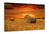 Leinwandbilder - Leinwandbild Strohballen 60x40 cm
