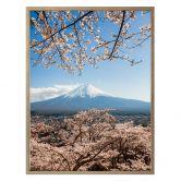 Poster Colombo - Mount Fuji in Japan