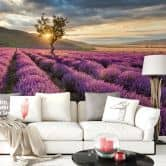 Lavender in the Provence - Photo Wallpaper