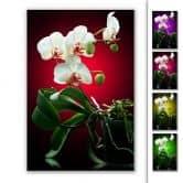 Stampa su Forex- Splendore floreale di un'orchidea