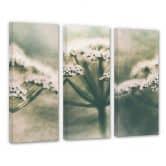 Leinwandbild Davidsson - Weiße Blüte - 3x 30x80 cm