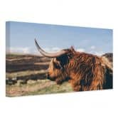 Canvas Highland Cow 02