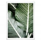 Poster Palmenblätter