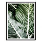 Premium Poster Palmbladeren