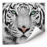 Wallprint W - Gorgeous Sumatran Tiger